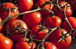Los usos del tomate en la cocina según su variante