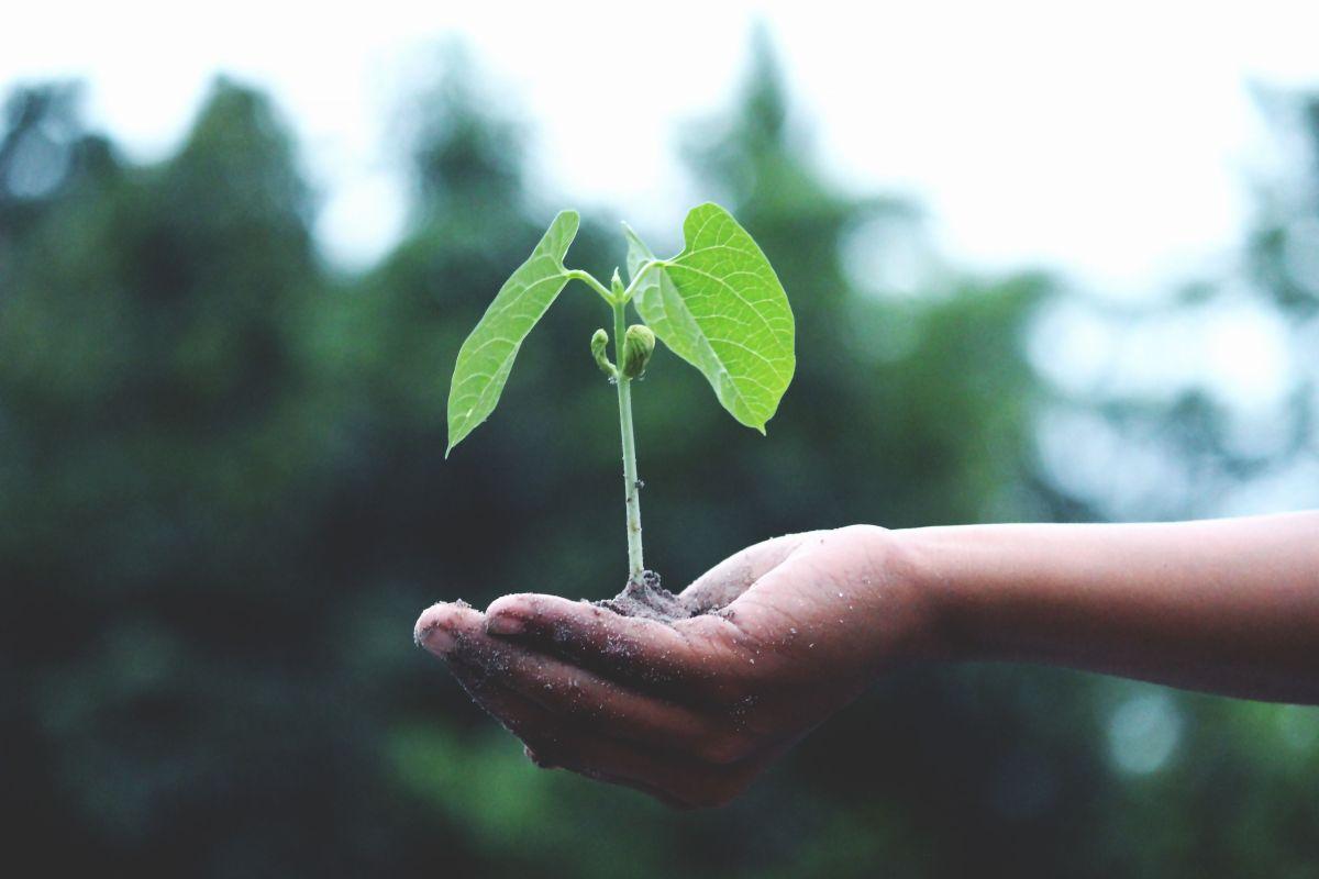 Cinco proyectos de jardinería que puedes hacer fácilmente en tu tiempo libre
