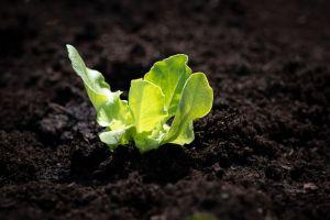 """Qué es un """"jardín de la victoria"""" y cómo te ayudaría para esta cuarentena"""