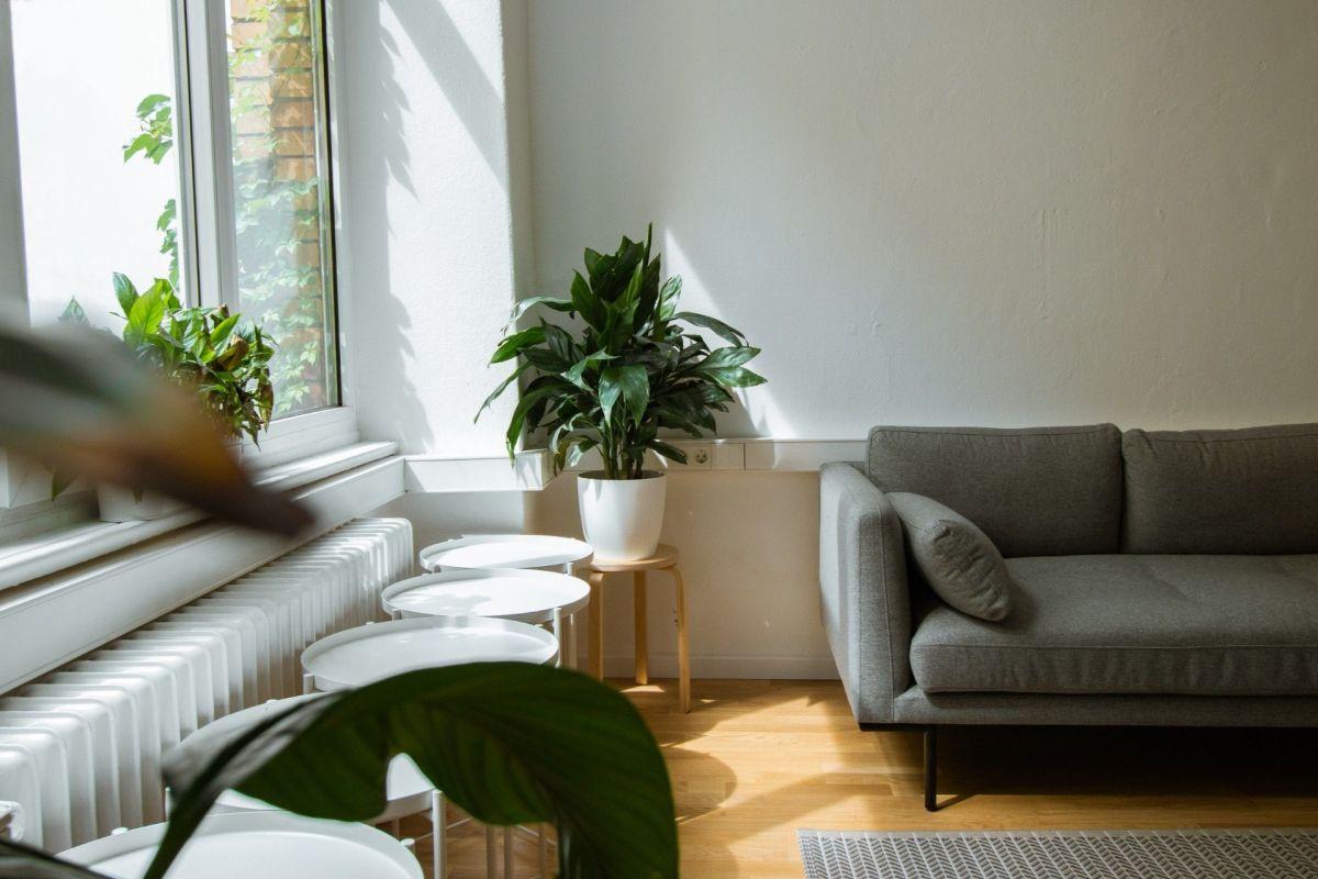 La entrada de luz solar y aire fresco a tu hogar es benéfico para tu salud.