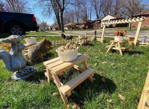 FOTOS: Abre un restaurante para ardillas y pájaros en su jardín