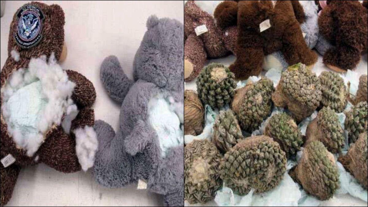 El espinoso y suculento relleno que descubrieron en ositos de peluche enviados desde México