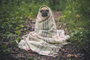 La temperatura normal de un perro, sus alteraciones y cómo controlarla