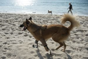 Las patas biónicas para mascotas que sufren accidentes o enfermedades