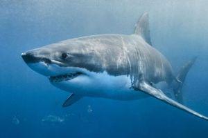 Confirman que ejecutiva neoyorquina de la moda murió atacada por tiburón que la habría confundido con una foca