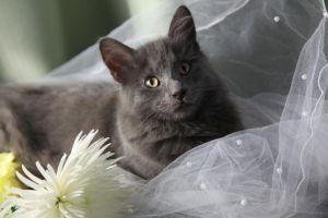 Hombre se casa con su gato para recaudar fondos para santuario animal