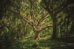 Cuál es el árbol que te protege, según el horóscopo celta