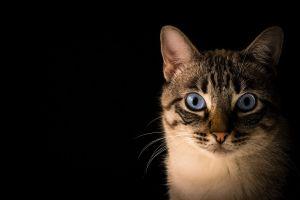 Los gatos SÍ se infectan de COVID-19, pero su respuesta al virus es sorprendente