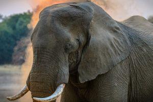 """Piden a jueces declarar """"persona"""" a elefanta para que sea liberada de zoológico en Nueva York"""