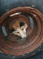Bomberos rescatan a pequeño zorro atrapado en la llanta de un auto