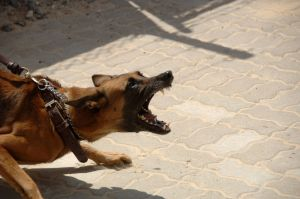 Madre de Alabama muere después de ser atacada por cinco perros