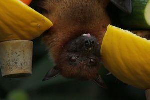 Bebé es atacada por murciélago mientras dormía