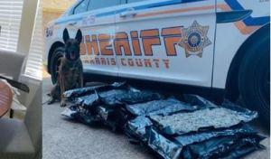 Reciben por error 32 bolsas de marihuana en su puerta: un sheriff le quiere regresar la mercancía a los dueños