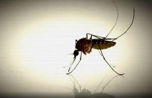 Se confirman 10 casos más del virus del Nilo Occidental en Miami