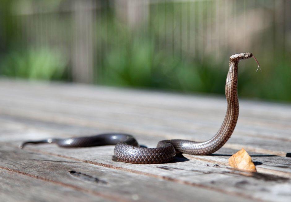 Conoce lo bueno y lo malo de soñar con serpientes