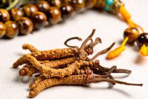 Hongo Yarsagumba: el viagra del Himalaya que vale más que el oro