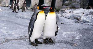 """Científico intoxicado por gases en excrementos de pingüinos: """"fue como si me hubiera drogado"""""""