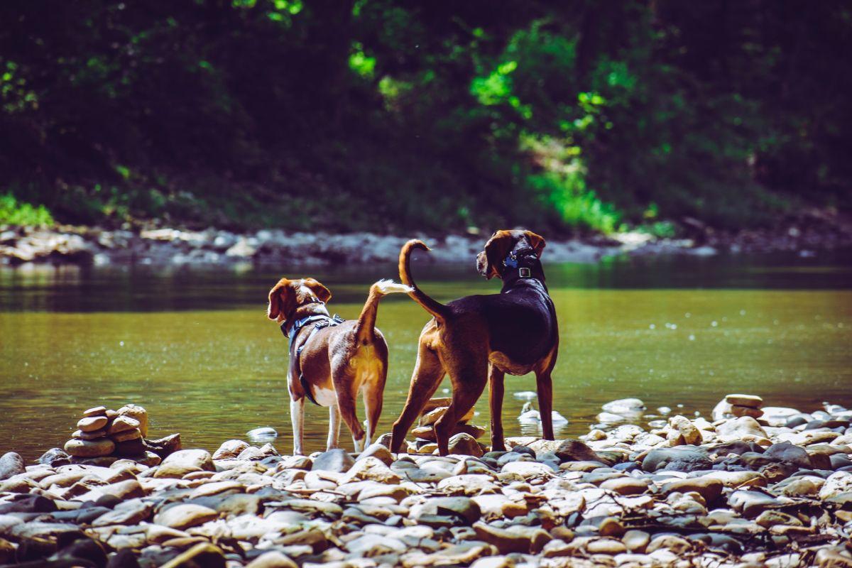 Perros cuidan a niño autista que se perdió en Florida