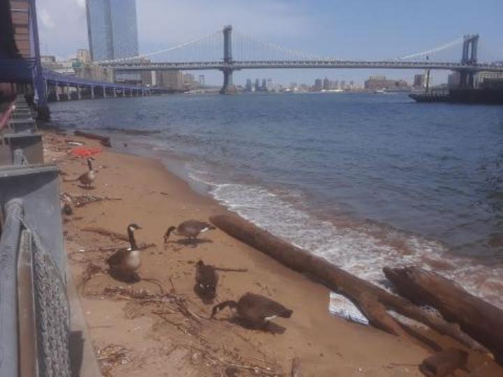 Hallan cadáver de mujer flotando en East River de Nueva York