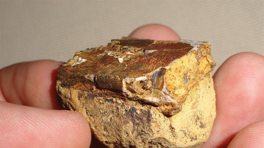 Paleontólogo descubre fósiles de reptil volador de hace 135 millones de años en Colombia
