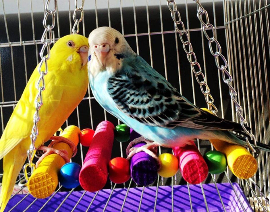 Variedad de casa y accesorios para pájaros si tienes uno de mascota en tu hogar