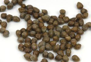 Por qué las alcaparras en vinagre podrían servir para hacer medicinas contra la epilepsia y la arritmia
