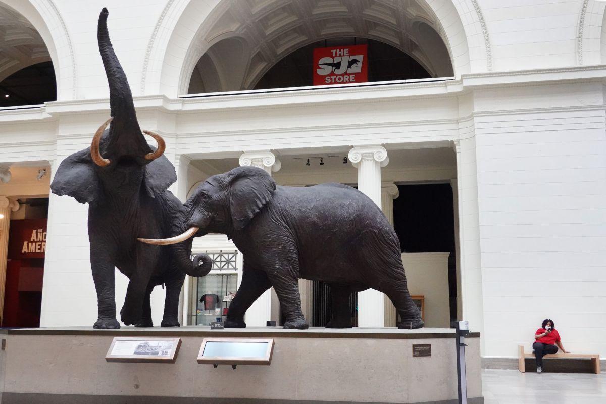 un 44% de los museos han tenido que despedir a una parte de su personal.