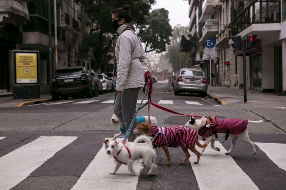 Cubrebocas en tus mascotas, práctica cruel que pone en riesgo su salud