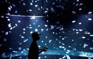 Acuario de Tokio reabre sus puertas e inaugura tanque gigante de medusas