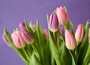 Qué flor describe perfectamente la personalidad de tu signo zodiacal