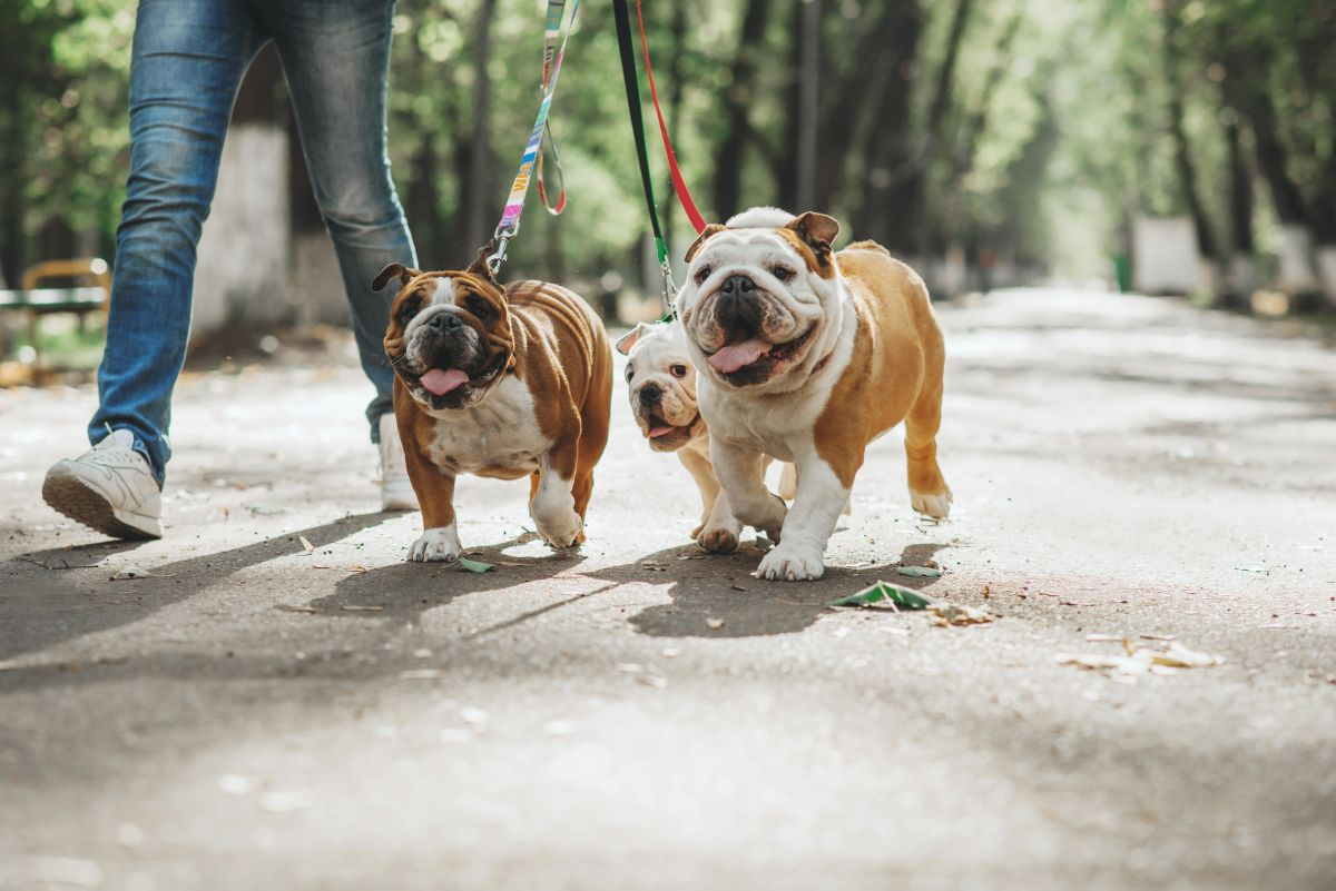 Muere luego de estrangularse con las correas de sus perros mientras los paseaba