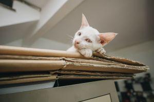 Las cajas de Amazon tienen un nuevo diseño y podrás reciclarlas como una casa para tu mascota