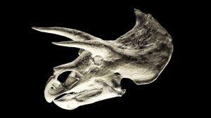 """La salvaje """"Guerra de los huesos"""" lidiada por dos científicos en el Viejo Oeste de Estados Unidos"""