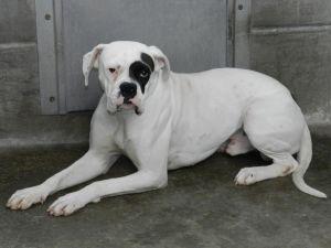 Fiscal de Los Ángeles presentó cinco cargos de maltrato animal contra un hombre hispano