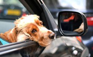5 reglas básicas para que tu mascota viaje segura a bordo de tu automóvil