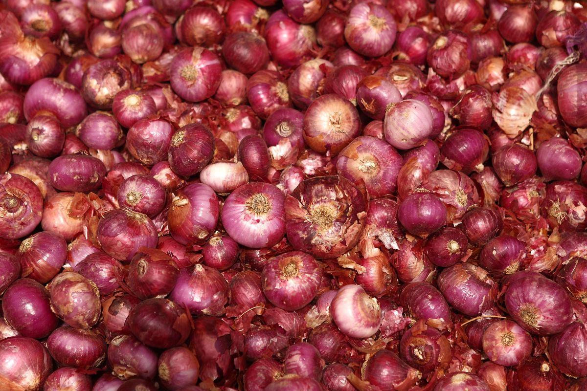 Un nuevo brote de salmonela por consumir cebolla roja afecta a cerca de 400 personas en 34 estados, entre ellos California y Nueva York