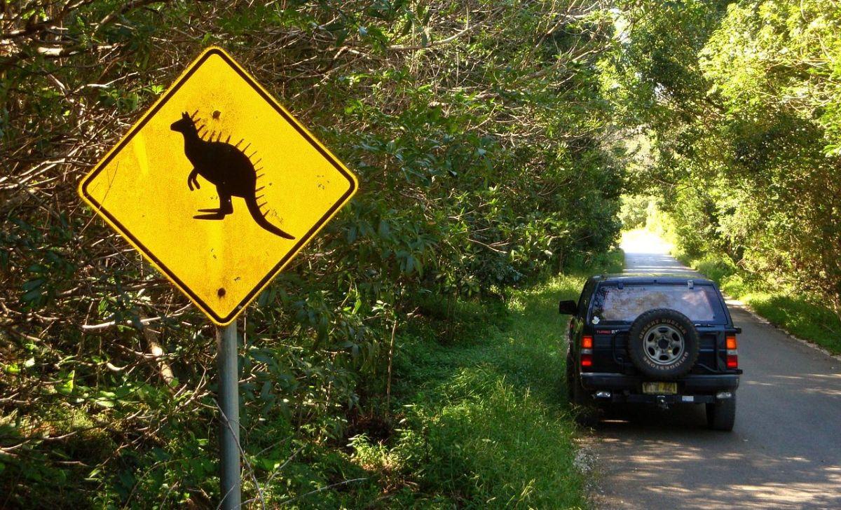 Cómo actuar si te encuentras con un animal en medio de la carretera mientras conduces un auto
