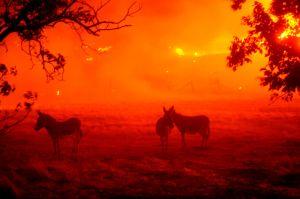 Rayos y tormentas de viento empeorarán grandes incendios forestales activos en California