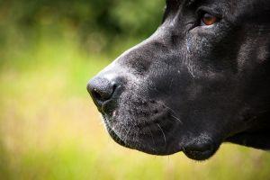 Le reconstruyen el rostro a niño de 6 años tras ser atacado por un perro pitbull
