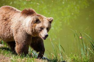 Graban a un oso dentro de un supermercado de California
