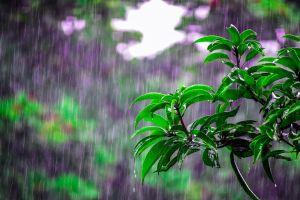 Cuáles son los usos mágicos del agua de lluvia