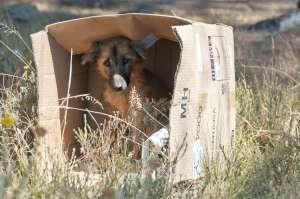 Captan el triste momento en el que un perro es abandonado por su dueña en una carretera