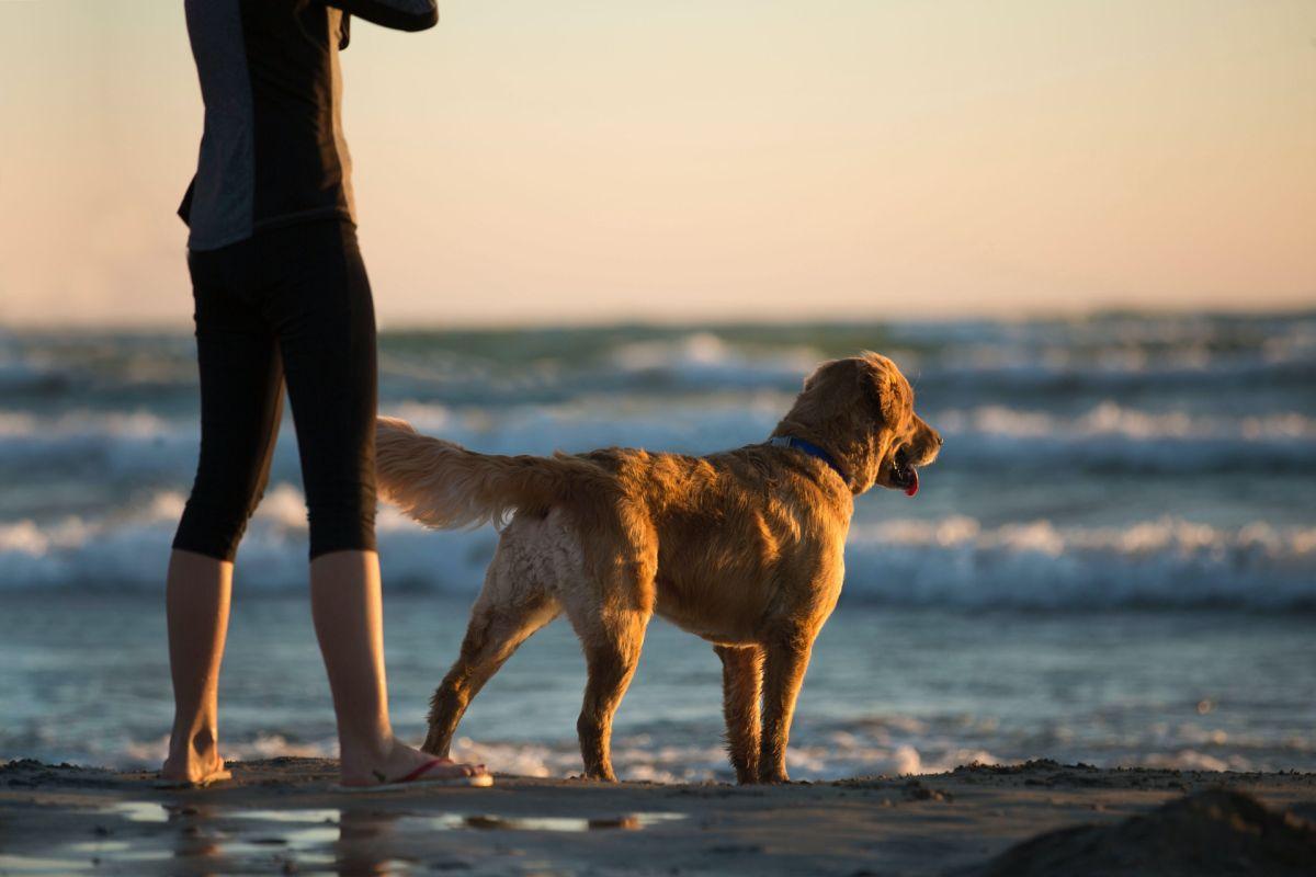 La asombrosa maniobra de rescate de un perro para que niña no se ahogue en el mar