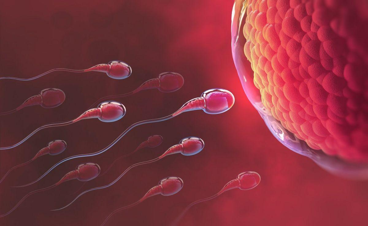 El cuerpo femenino rechaza los espermatozoides que no quiere cuando van camino al óvulo