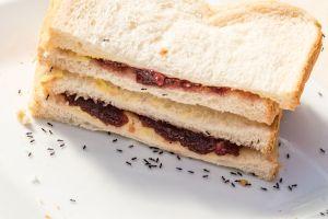 7 claves para evitar los insectos y hormigas en la cocina