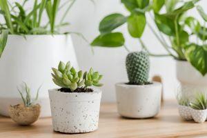 Los mejores kits de plantas suculentas para decorar tu casa que encuentras en Amazon