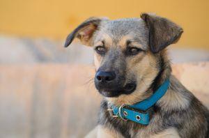 """Se vuelve viral perro que fue adoptado y """"contratado"""" por agencia de autos Hyundai"""
