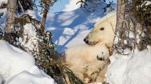 """""""Somos mucho más iguales a los osos polares de lo que creemos"""""""