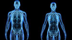 ¿De qué está hecho realmente nuestro cuerpo?