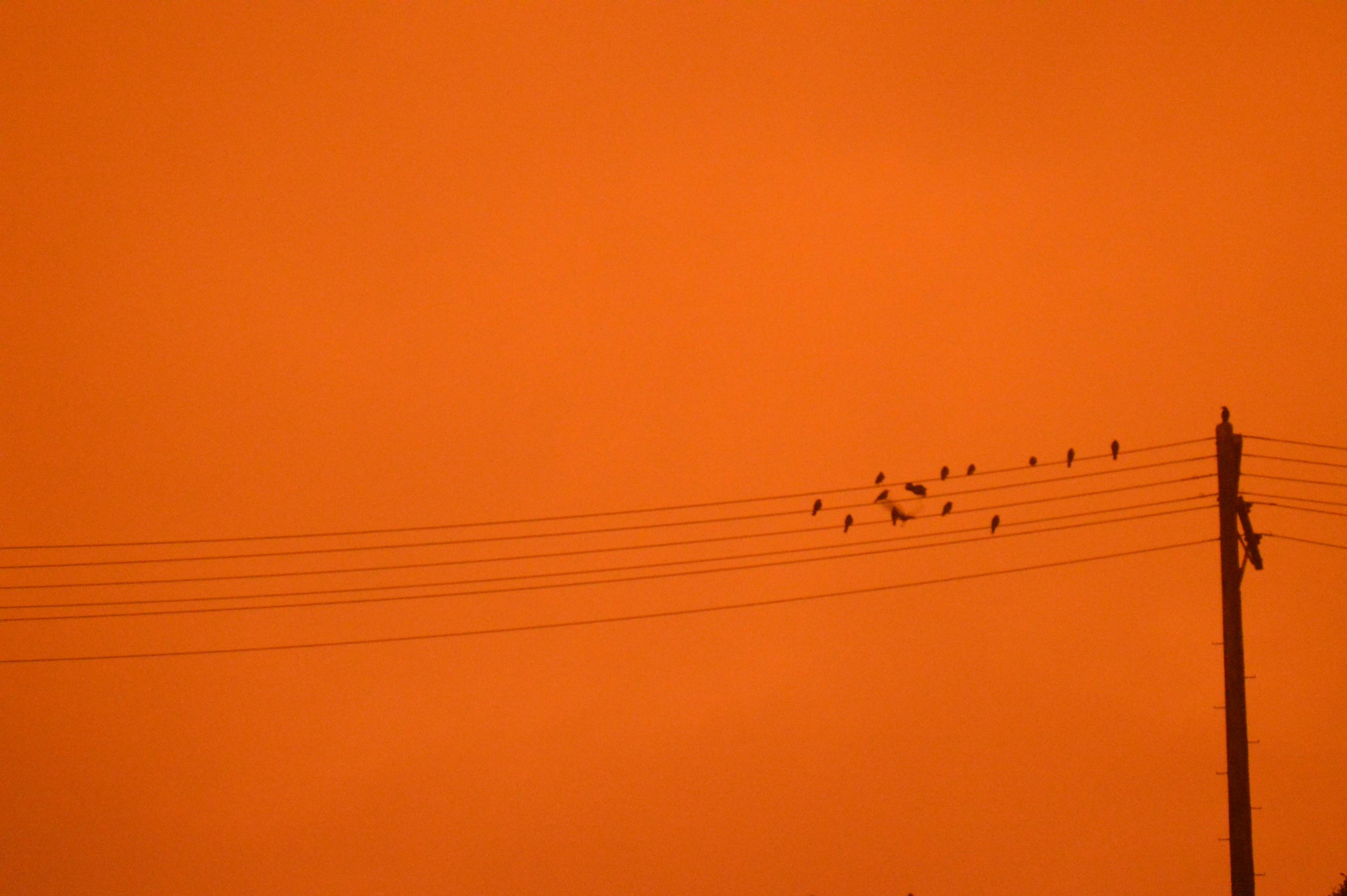 Pájaros sobre cables en el cielo rojizo.